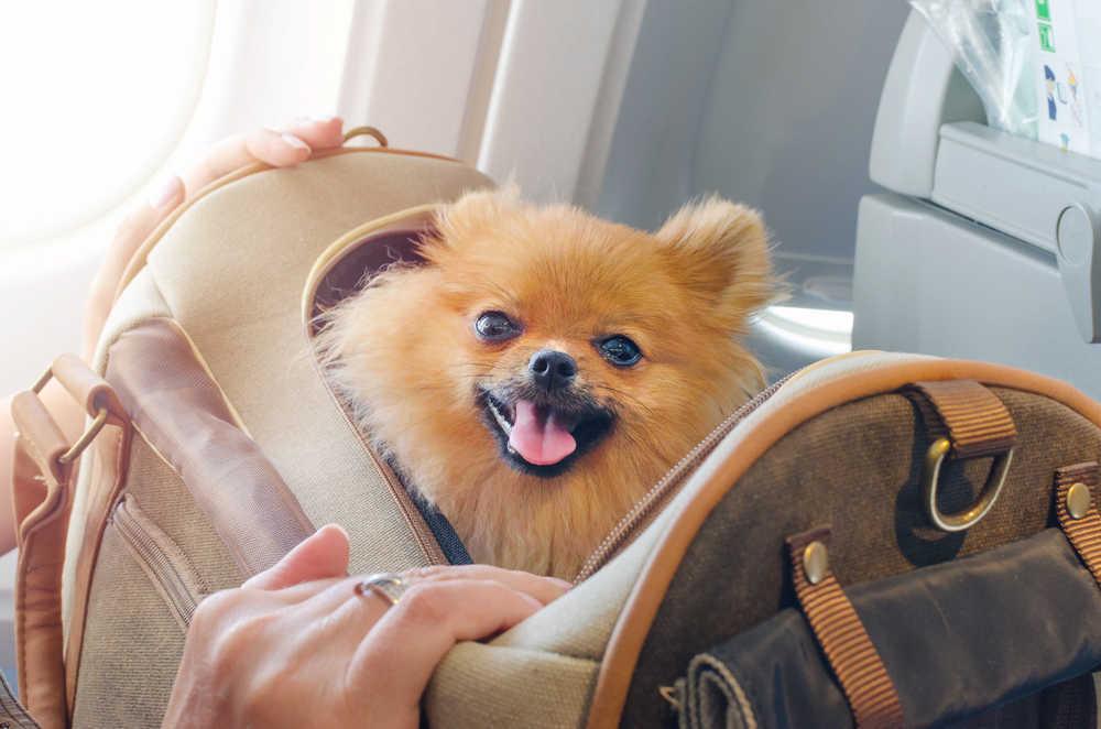 Viajar con tu mascota en avión es cada día más fácil