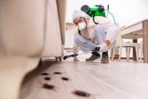Combatir las plagas: una de las nuevas prioridades en el hogar